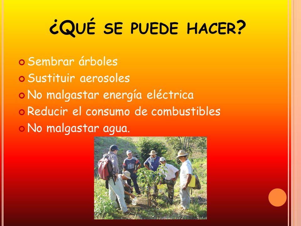 ¿Q UÉ SE PUEDE HACER ? Sembrar árboles Sustituir aerosoles No malgastar energía eléctrica Reducir el consumo de combustibles No malgastar agua.