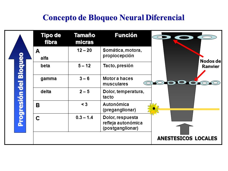 Concepto de Bloqueo Neural Diferencial Tipo de fibra Tamaño micras FunciónA alfa alfa 12 – 20 Somática, motora, propiocepción beta beta 5 – 12 Tacto,
