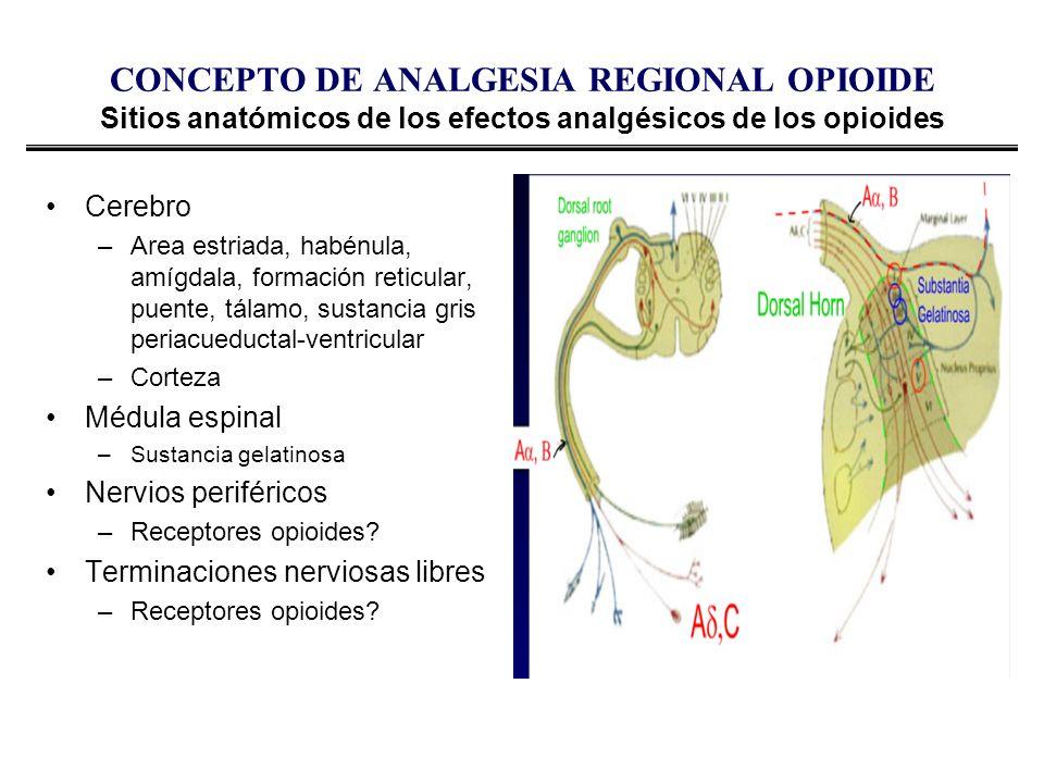 CONCEPTO DE ANALGESIA REGIONAL OPIOIDE Sitios anatómicos de los efectos analgésicos de los opioides Cerebro –Area estriada, habénula, amígdala, formac