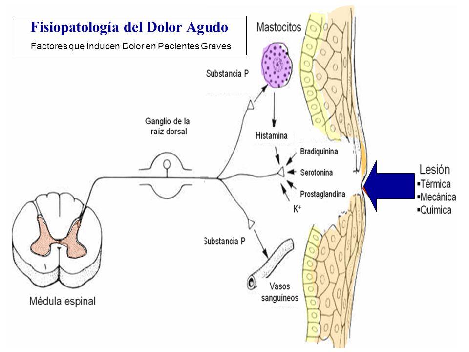 Fisiopatología del Dolor Agudo Factores que Inducen Dolor en Pacientes Graves