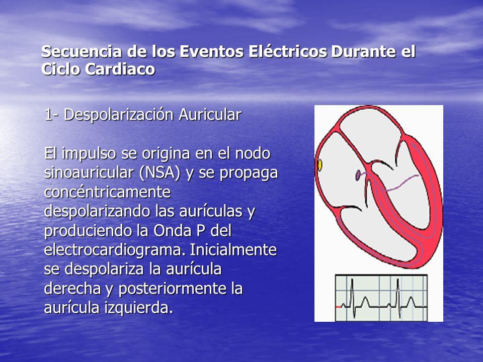 1- Despolarización Auricular El impulso se origina en el nodo sinoauricular (NSA) y se propaga concéntricamente despolarizando las aurículas y produciendo la Onda P del electrocardiograma.