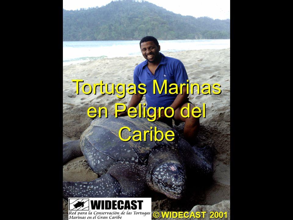 Tortugas Marinas en Peligro del Caribe © WIDECAST 2001