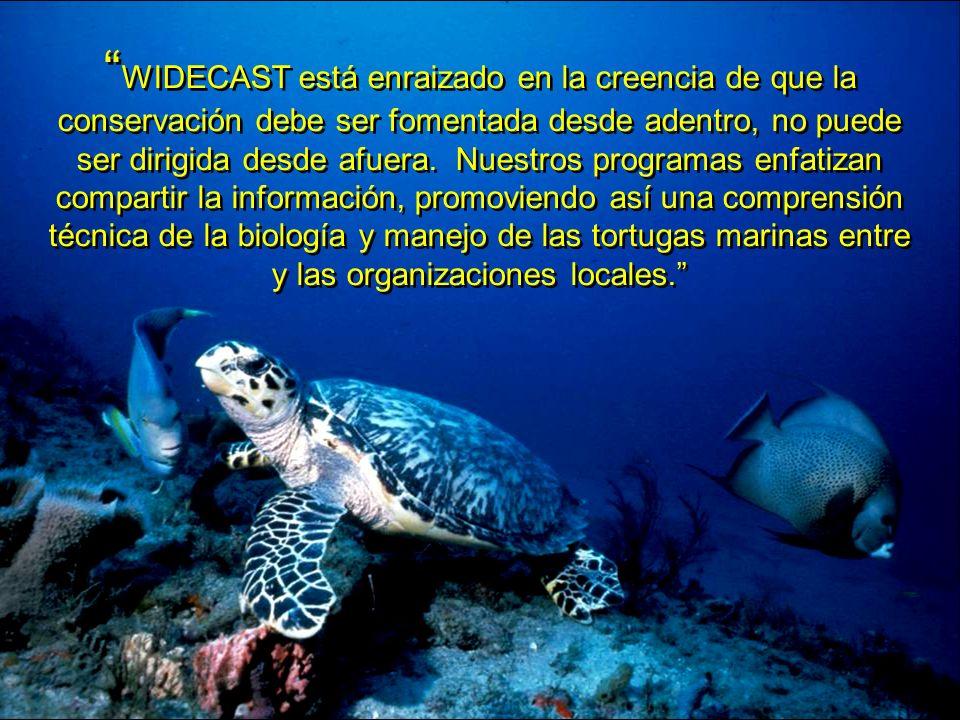 WIDECAST está enraizado en la creencia de que la conservación debe ser fomentada desde adentro, no puede ser dirigida desde afuera. Nuestros programas