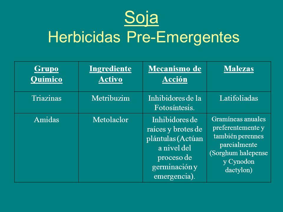 Soja Herbicidas Pre-Emergentes Grupo Químico Ingrediente Activo Mecanismo de Acción Malezas TriazinasMetribuzimInhibidores de la Fotosíntesis. Latifol