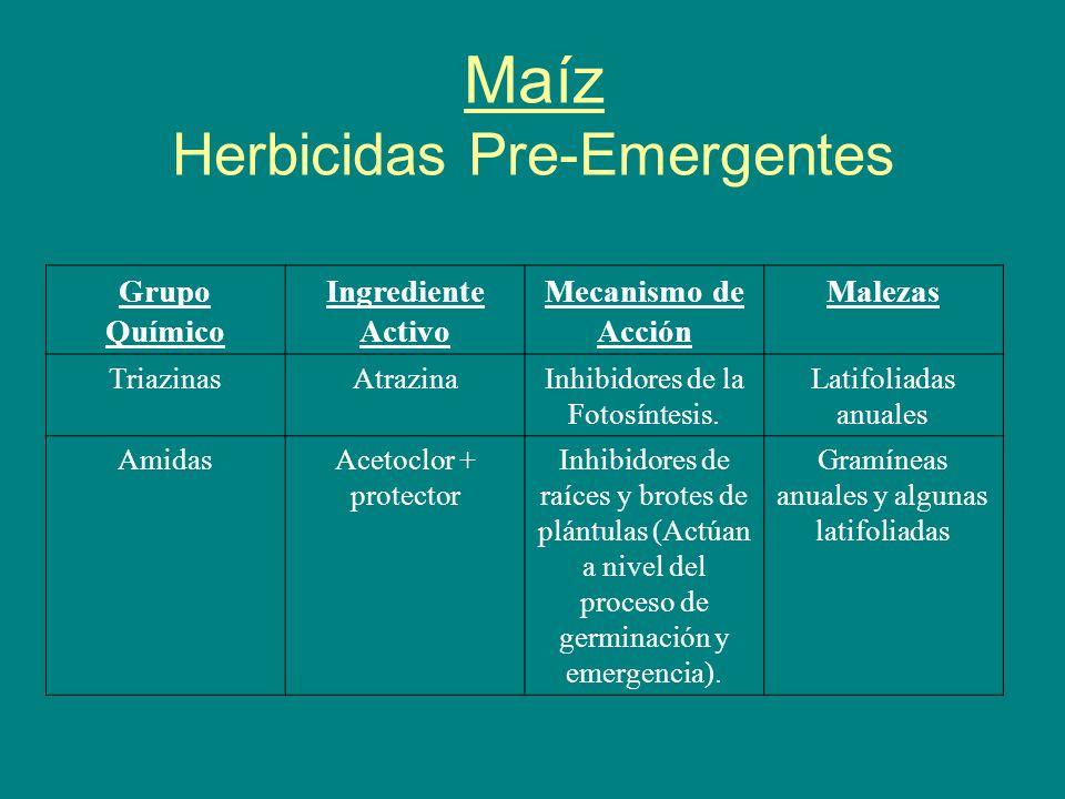 Maíz Herbicidas Pre-Emergentes Grupo Químico Ingrediente Activo Mecanismo de Acción Malezas TriazinasAtrazinaInhibidores de la Fotosíntesis. Latifolia