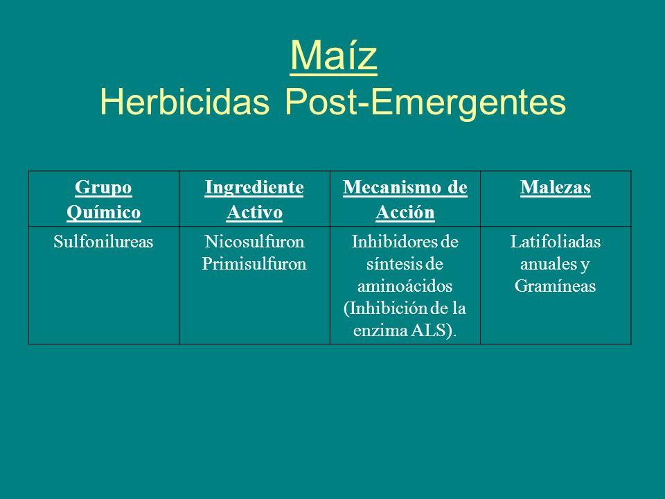 Maíz Herbicidas Post-Emergentes Grupo Químico Ingrediente Activo Mecanismo de Acción Malezas SulfonilureasNicosulfuron Primisulfuron Inhibidores de sí