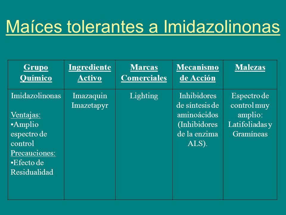 Maíces tolerantes a Imidazolinonas Grupo Químico Ingrediente Activo Marcas Comerciales Mecanismo de Acción Malezas Imidazolinonas Ventajas: Amplio esp