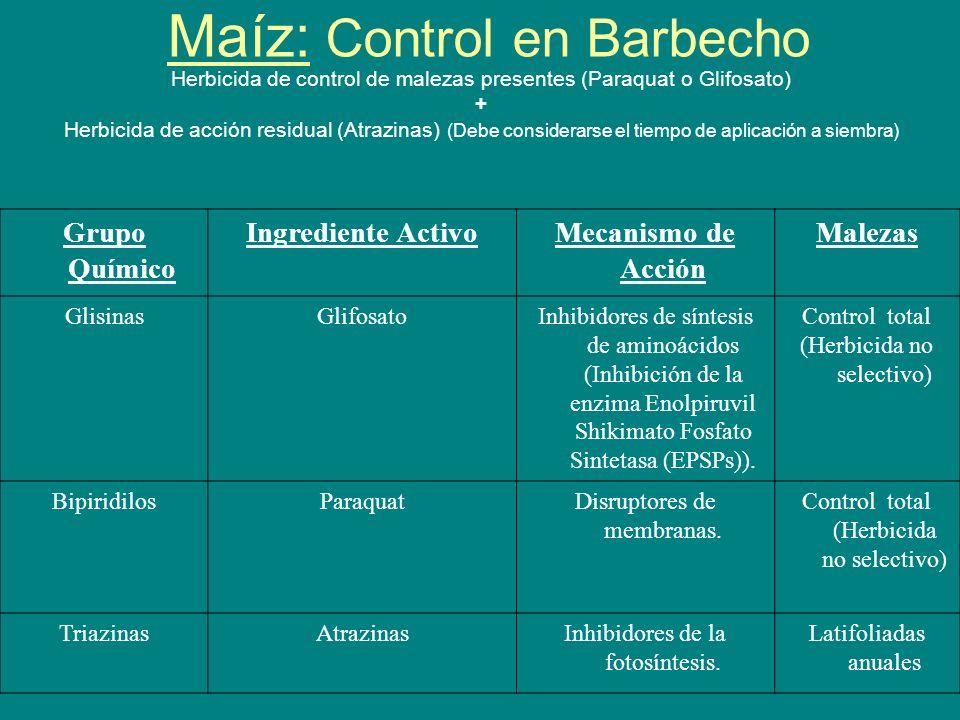 Maíz: Control en Barbecho Herbicida de control de malezas presentes (Paraquat o Glifosato) + Herbicida de acción residual (Atrazinas) (Debe considerar