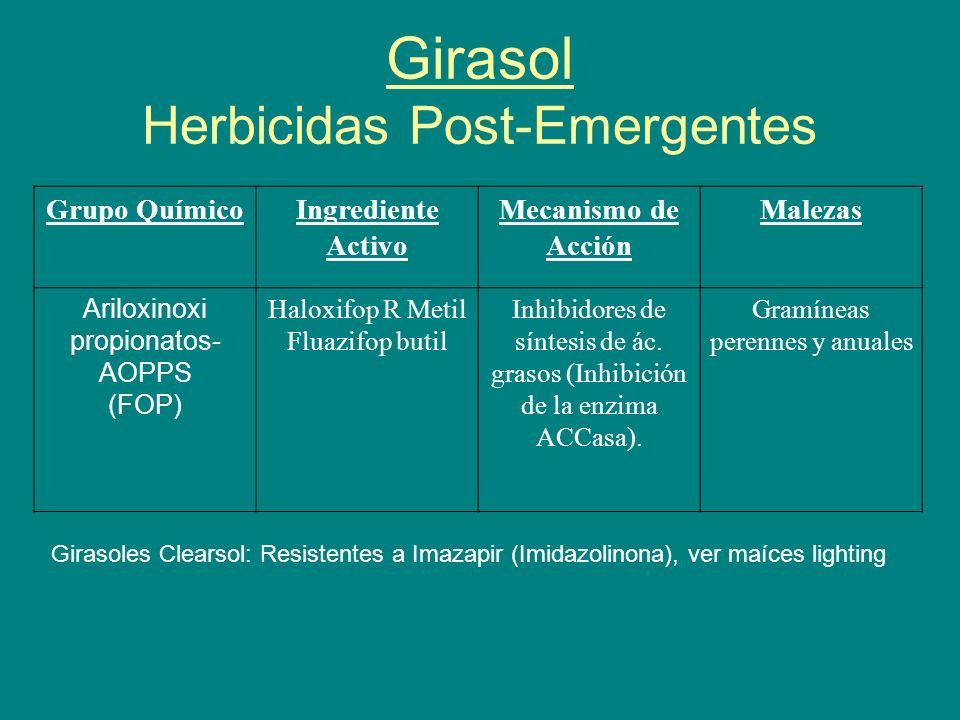 Girasol Herbicidas Post-Emergentes Grupo QuímicoIngrediente Activo Mecanismo de Acción Malezas Ariloxinoxi propionatos- AOPPS (FOP) Haloxifop R Metil