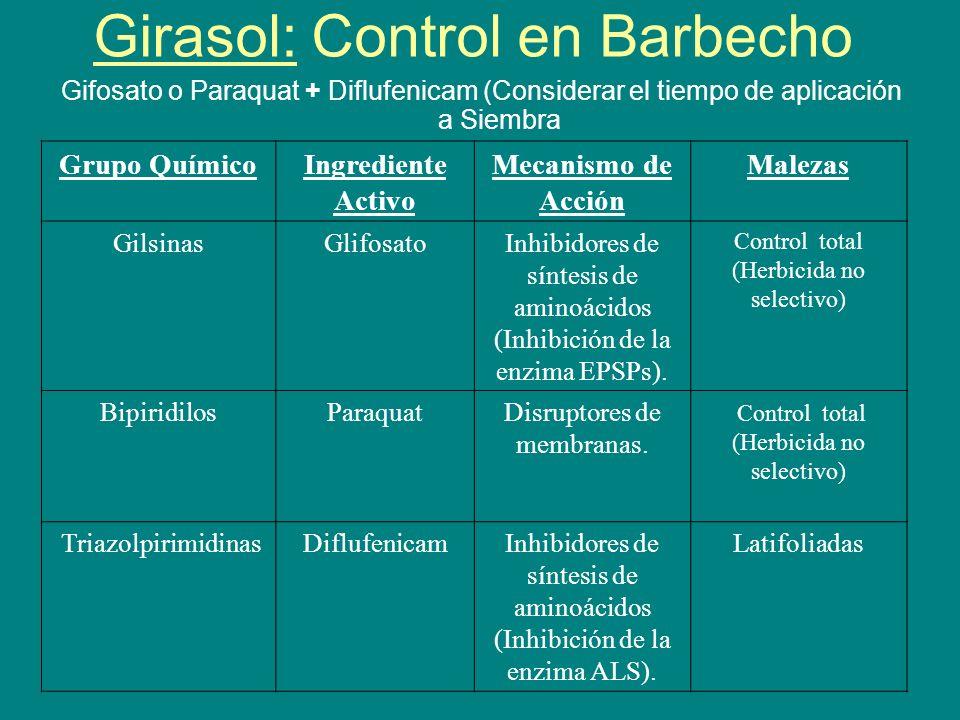 Girasol: Control en Barbecho Gifosato o Paraquat + Diflufenicam (Considerar el tiempo de aplicación a Siembra Grupo QuímicoIngrediente Activo Mecanism