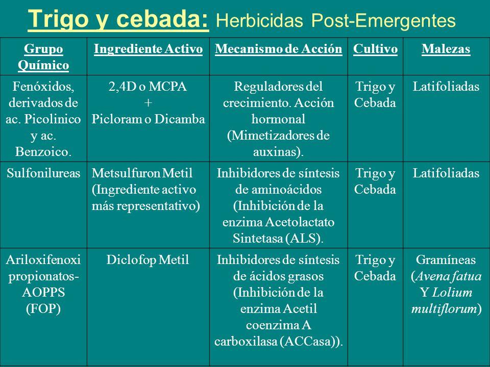 Trigo y cebada: Herbicidas Post-Emergentes Grupo Químico Ingrediente Activo Mecanismo de Acción CultivoMalezas Ariloxifenoxi propionatos- AOPPS (FOP) Fenoxaprop P Etil Inhibidores de síntesis de ác.
