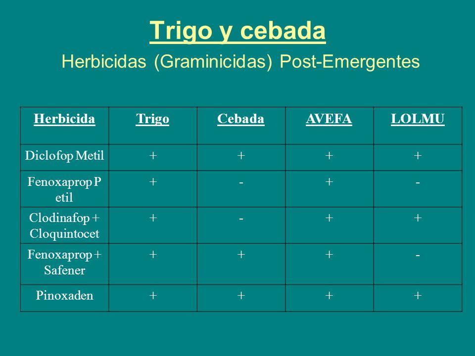 Trigo y cebada Herbicidas (Graminicidas) Post-Emergentes HerbicidaTrigoCebadaAVEFALOLMU Diclofop Metil++++ Fenoxaprop P etil +-+- Clodinafop + Cloquin