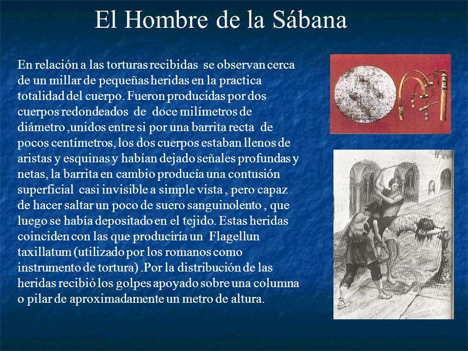 El cuerpo que envolvió la Sábana correspondía a un hombre de unos 35 años de 1,85 m de altura,79 Kg de peso, complexión atlética, pelo largo y barba.