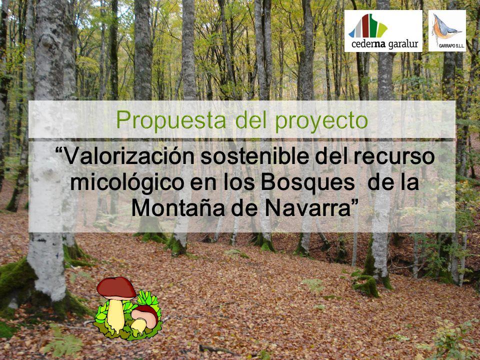 Desde 1997 se estudia en Navarra la producción de setas comestibles en los bosques Navarros El valor potencial del recurso micólogico en Navarra se estima en 7,4 millones de /año.