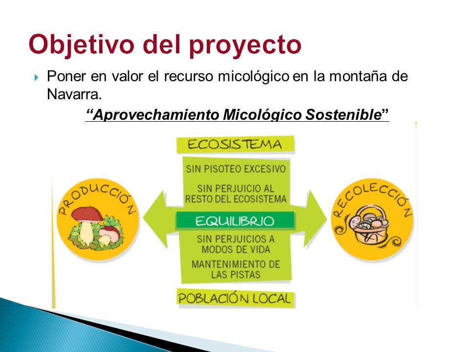 Impulso y creación de 3 áreas de aprovechamiento micológico regulado.