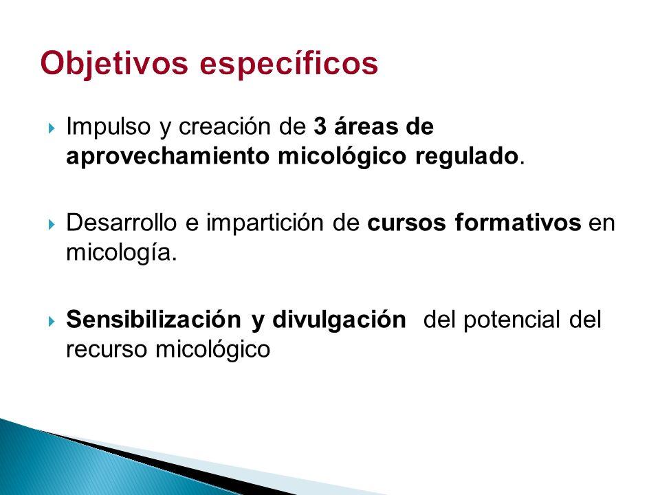 Acción 1.Realización de estudios técnicos preliminares.