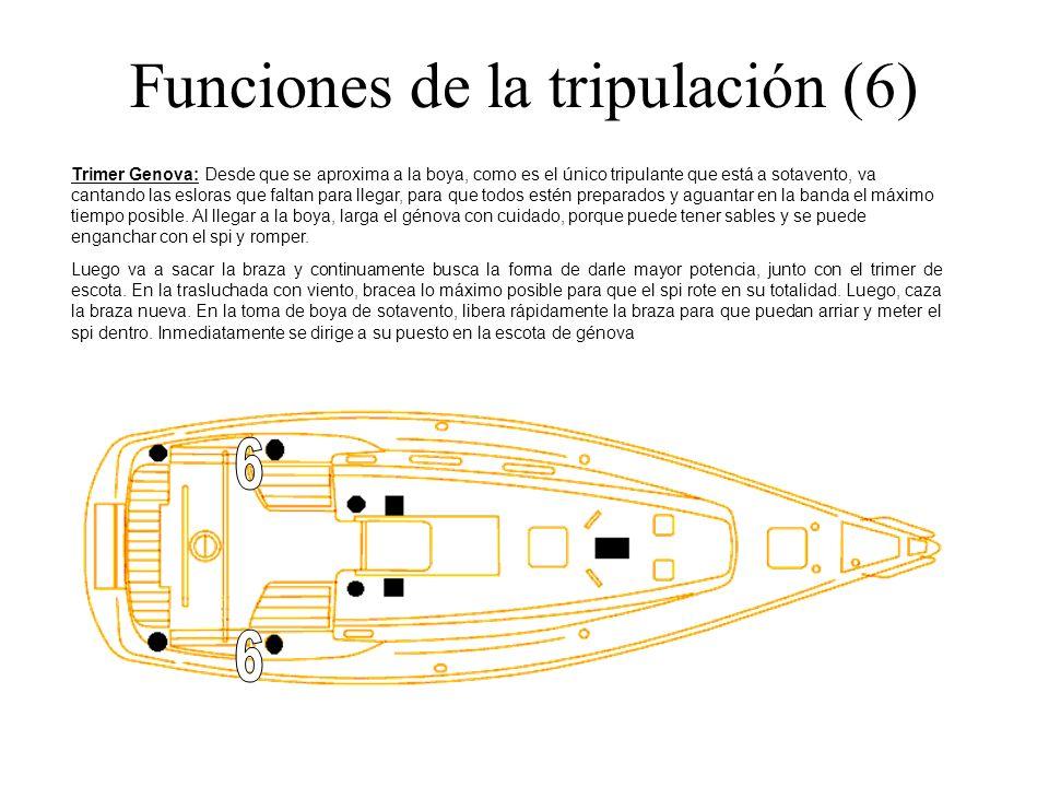 Funciones de la tripulación (6) Trimer Genova: Desde que se aproxima a la boya, como es el único tripulante que está a sotavento, va cantando las eslo