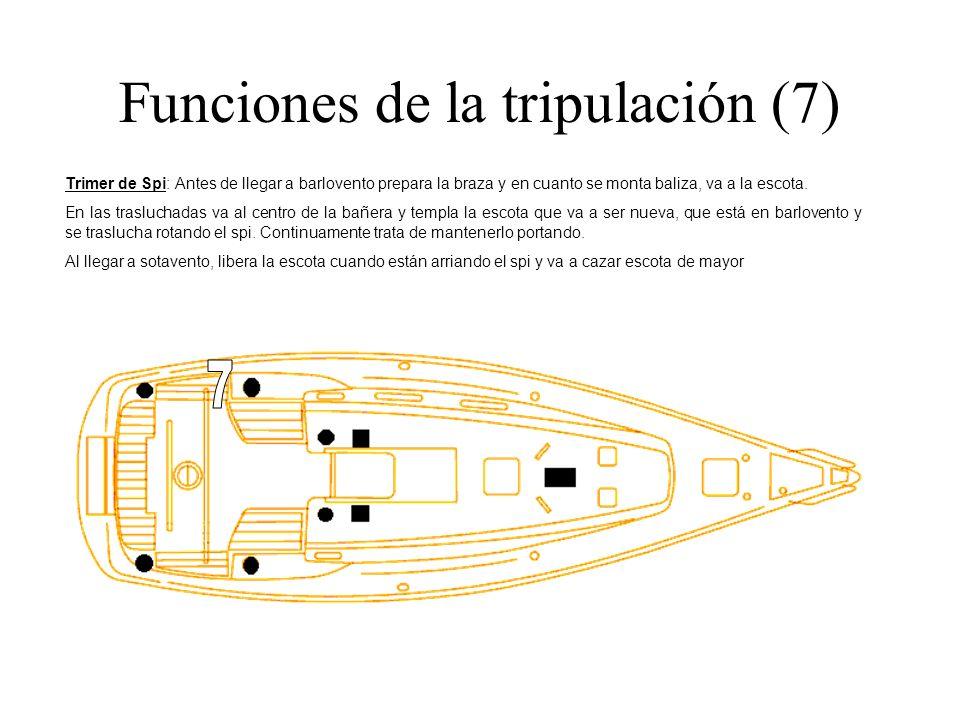 Funciones de la tripulación (7) Trimer de Spi: Antes de llegar a barlovento prepara la braza y en cuanto se monta baliza, va a la escota. En las trasl