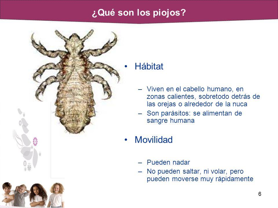 6 Hábitat –Viven en el cabello humano, en zonas calientes, sobretodo detrás de las orejas o alrededor de la nuca –Son parásitos: se alimentan de sangr