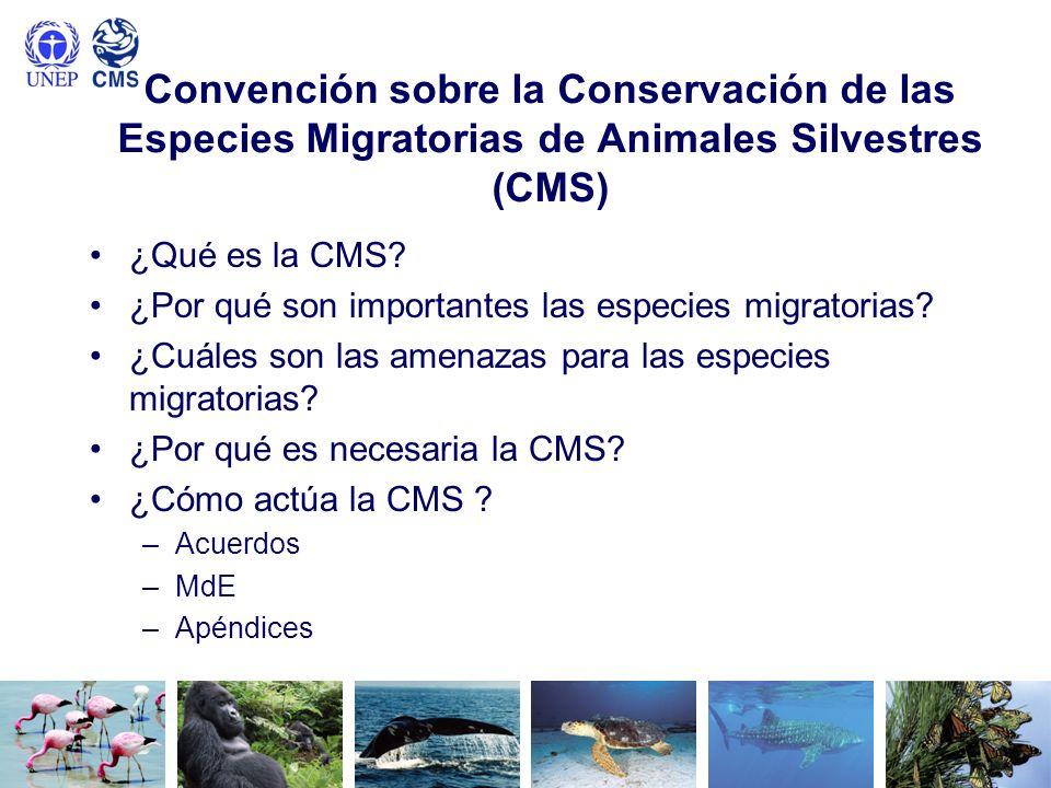 Convención sobre la Conservación de las Especies Migratorias de Animales Silvestres (CMS) ¿Qué es la CMS? ¿Por qué son importantes las especies migrat
