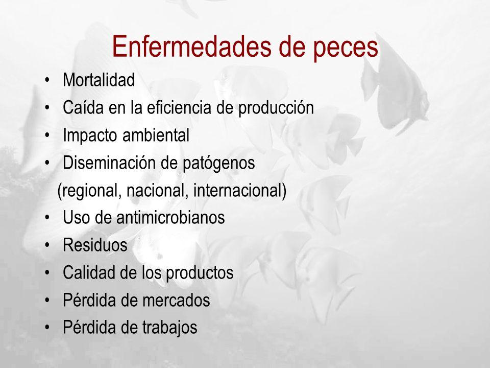 Mortalidad Caída en la eficiencia de producción Impacto ambiental Diseminación de patógenos (regional, nacional, internacional) Uso de antimicrobianos