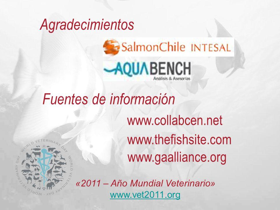 Agradecimientos www.collabcen.net www.thefishsite.com Fuentes de información «2011 – Año Mundial Veterinario» www.vet2011.org www.vet2011.org www.gaal