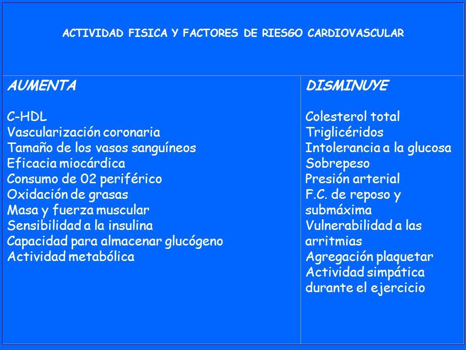 ACTIVIDAD FISICA Y FACTORES DE RIESGO CARDIOVASCULAR AUMENTA C-HDL Vascularización coronaria Tamaño de los vasos sanguíneos Eficacia miocárdica Consum
