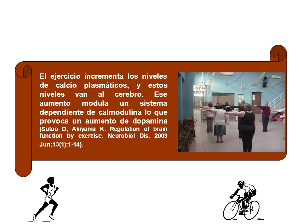 El ejercicio incrementa los niveles de calcio plasmáticos, y estos niveles van al cerebro. Ese aumento modula un sistema dependiente de calmodulina lo