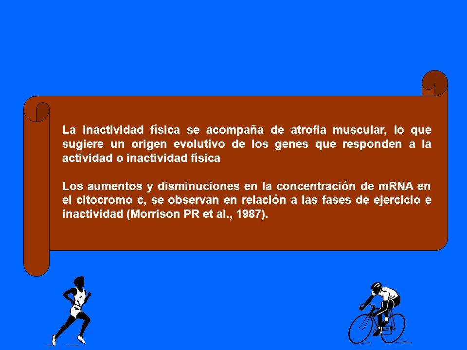 La inactividad física se acompaña de atrofia muscular, lo que sugiere un origen evolutivo de los genes que responden a la actividad o inactividad físi