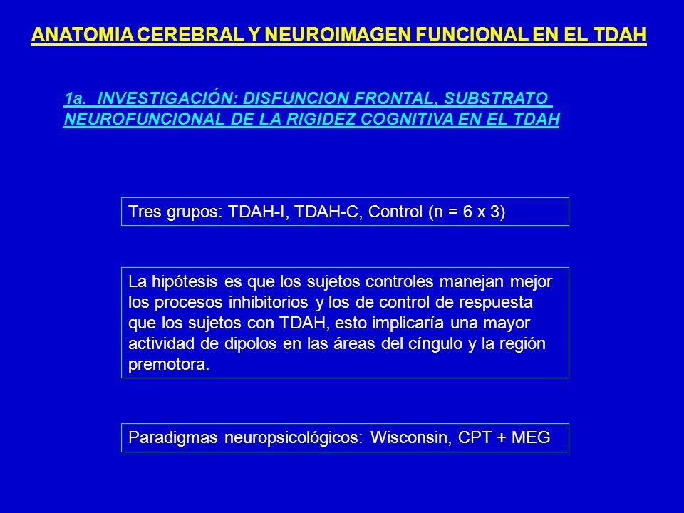 ANATOMIA CEREBRAL Y NEUROIMAGEN FUNCIONAL EN EL TDAH 1a. INVESTIGACIÓN: DISFUNCION FRONTAL, SUBSTRATO NEUROFUNCIONAL DE LA RIGIDEZ COGNITIVA EN EL TDA