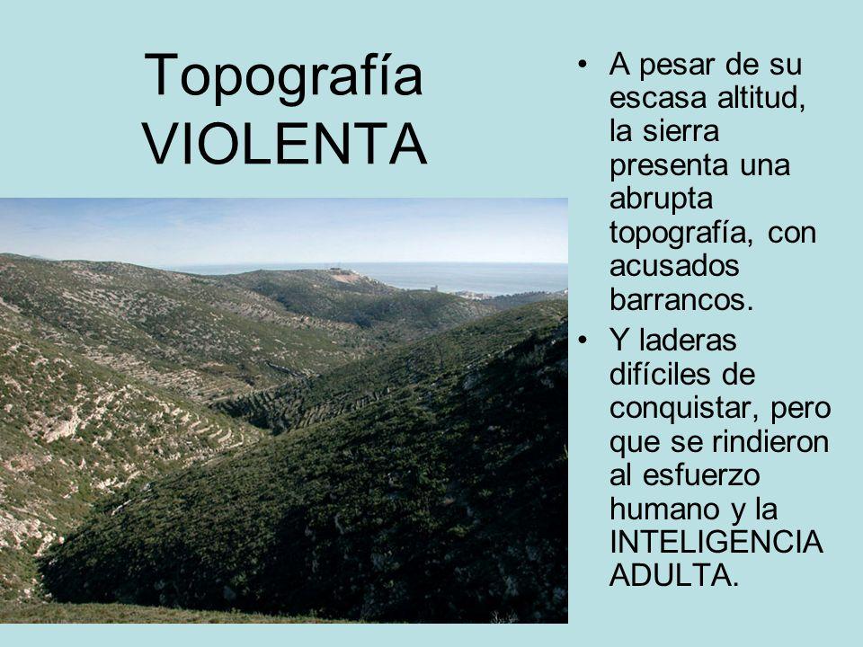 Topografía VIOLENTA A pesar de su escasa altitud, la sierra presenta una abrupta topografía, con acusados barrancos. Y laderas difíciles de conquistar