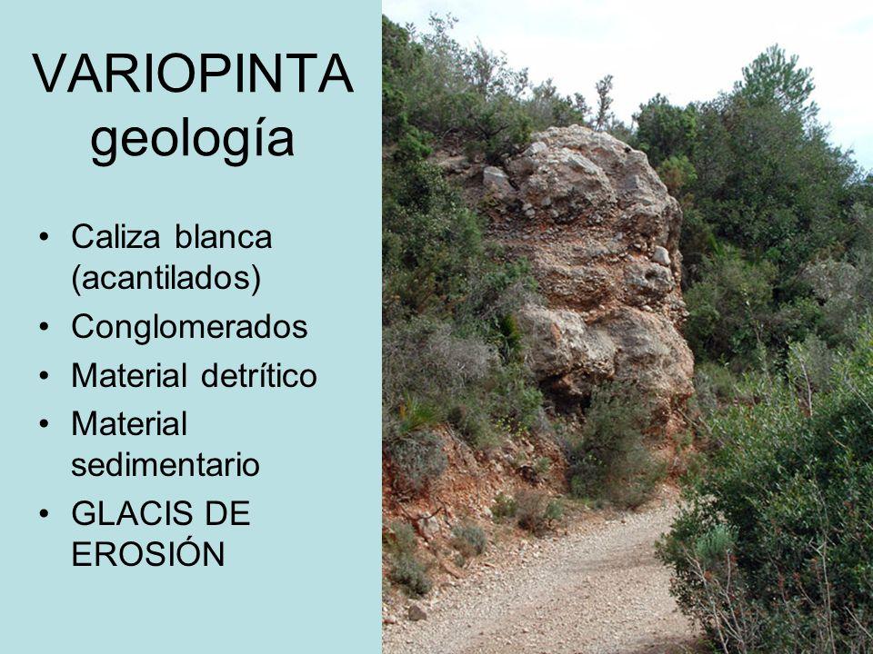 VARIOPINTA geología Caliza blanca (acantilados) Conglomerados Material detrítico Material sedimentario GLACIS DE EROSIÓN