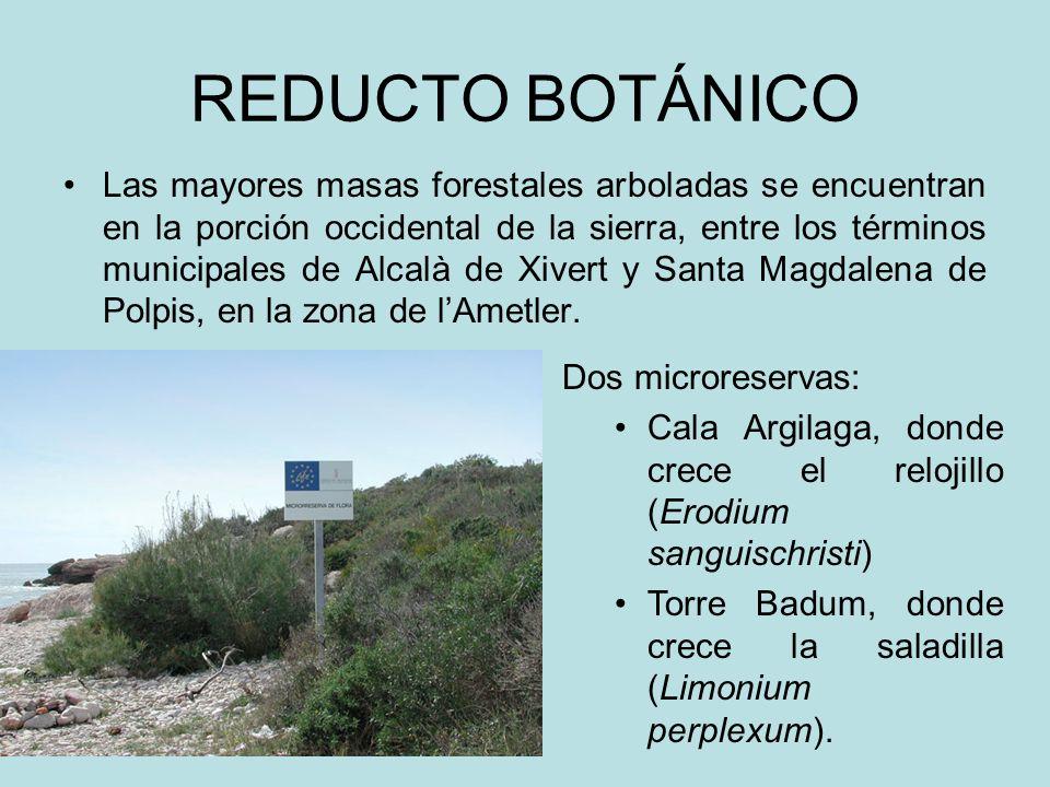 REDUCTO BOTÁNICO Las mayores masas forestales arboladas se encuentran en la porción occidental de la sierra, entre los términos municipales de Alcalà