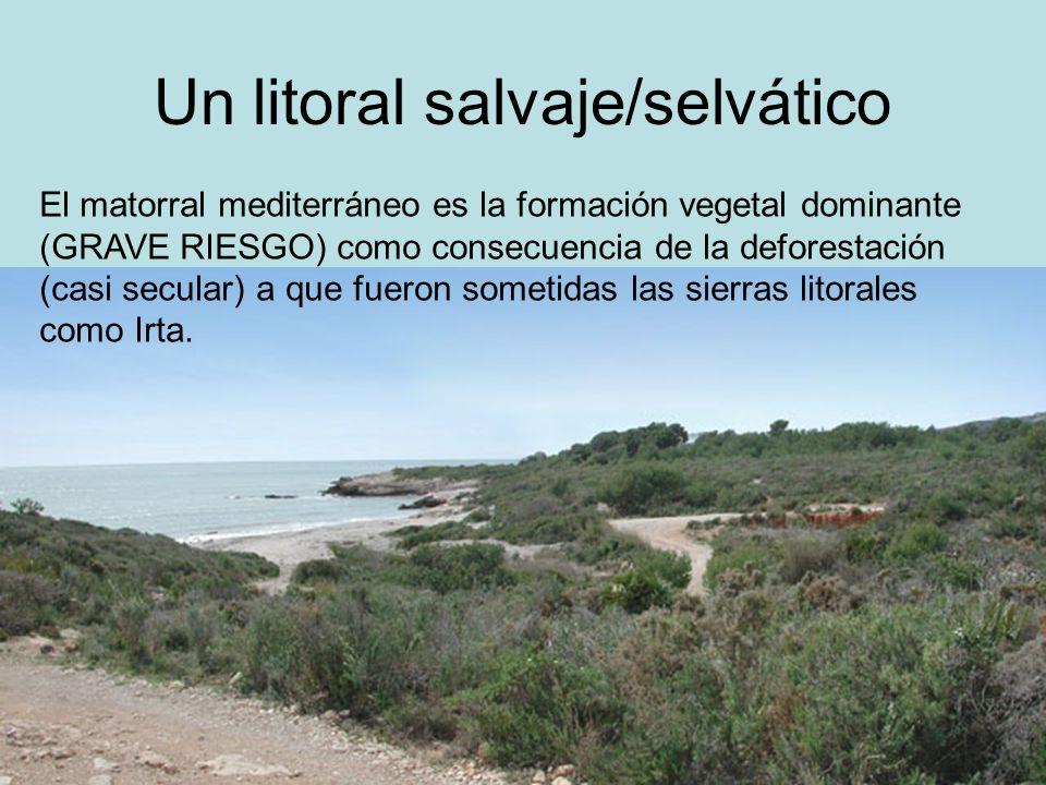 Un litoral salvaje/selvático El matorral mediterráneo es la formación vegetal dominante (GRAVE RIESGO) como consecuencia de la deforestación (casi sec