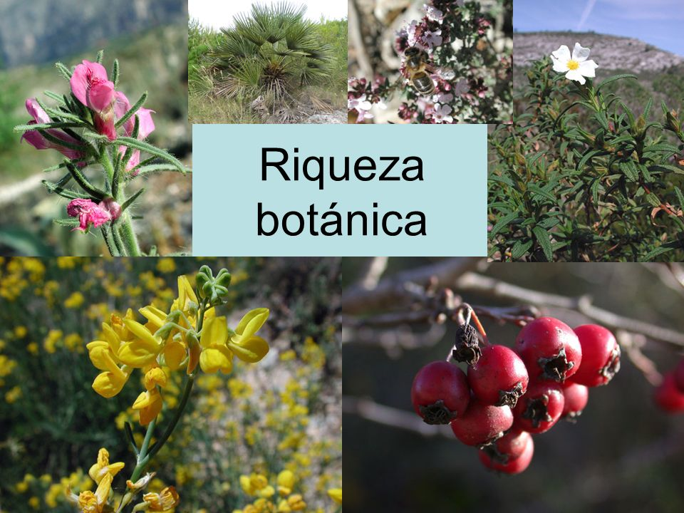 Riqueza botánica