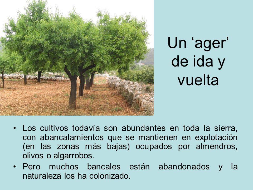 Un ager de ida y vuelta Los cultivos todavía son abundantes en toda la sierra, con abancalamientos que se mantienen en explotación (en las zonas más b