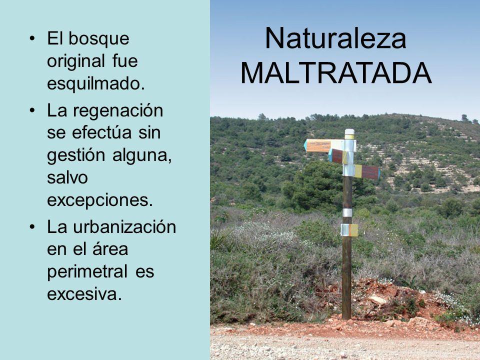 El bosque original fue esquilmado. La regenación se efectúa sin gestión alguna, salvo excepciones. La urbanización en el área perimetral es excesiva.
