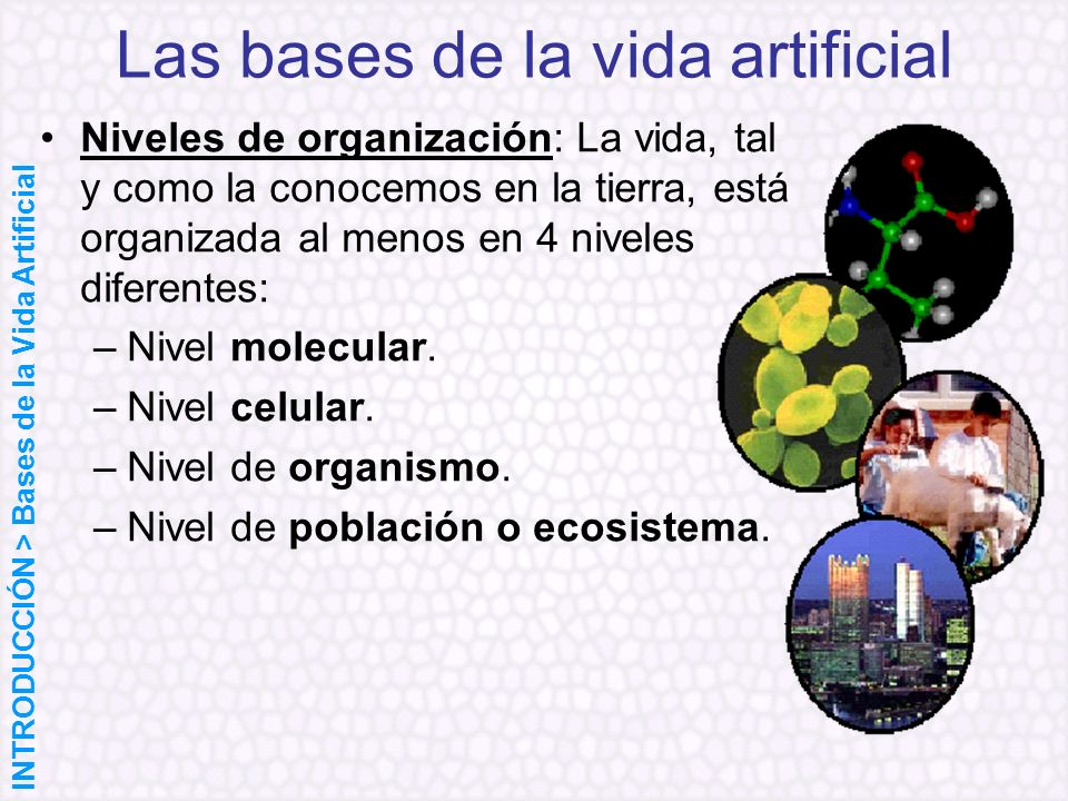 Las bases de la vida artificial Niveles de organización: La vida, tal y como la conocemos en la tierra, está organizada al menos en 4 niveles diferent