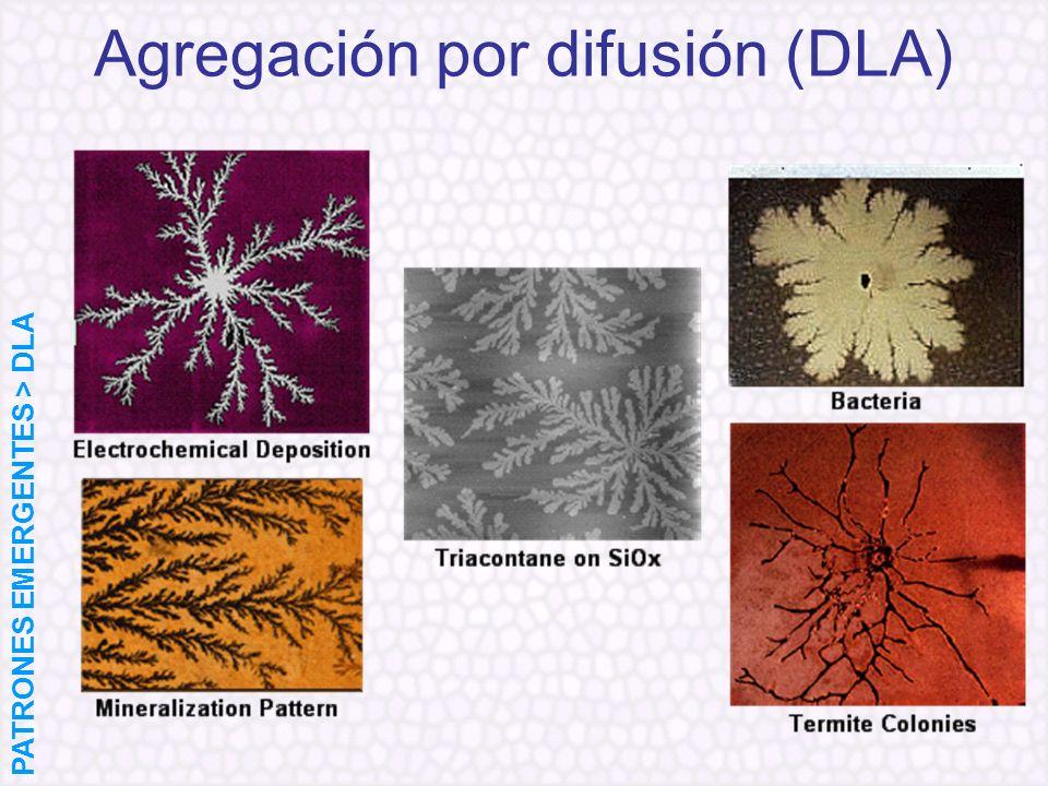 Agregación por difusión (DLA) PATRONES EMERGENTES > DLA