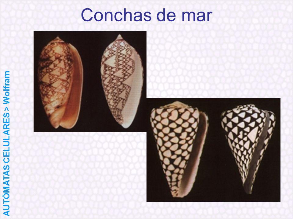 Conchas de mar AUTÓMATAS CELULARES > Wolfram