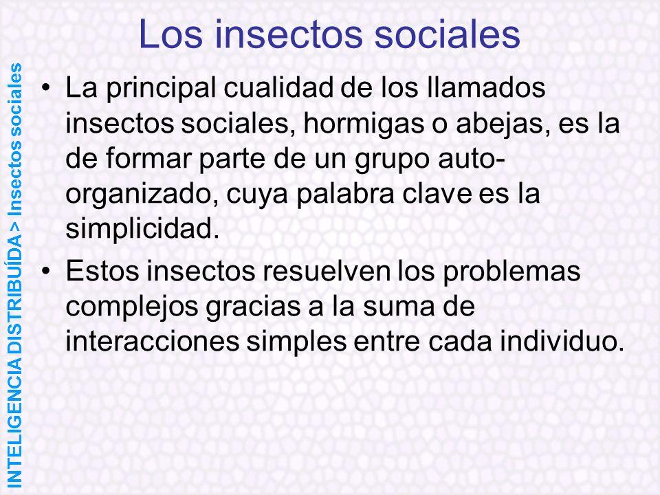 Los insectos sociales La principal cualidad de los llamados insectos sociales, hormigas o abejas, es la de formar parte de un grupo auto- organizado,