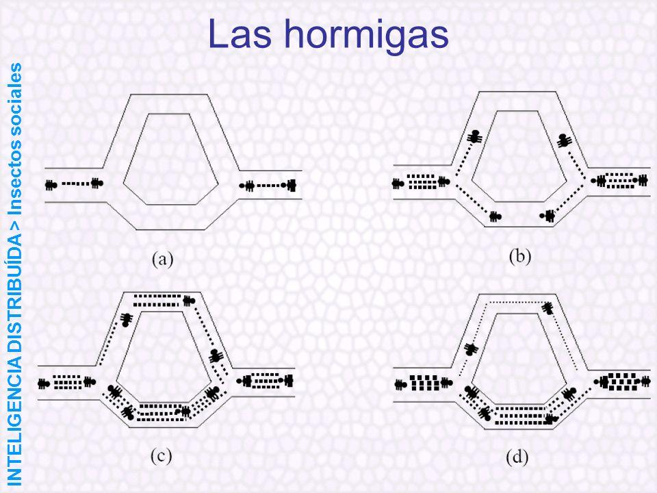 Las hormigas INTELIGENCIA DISTRIBUÍDA > Insectos sociales