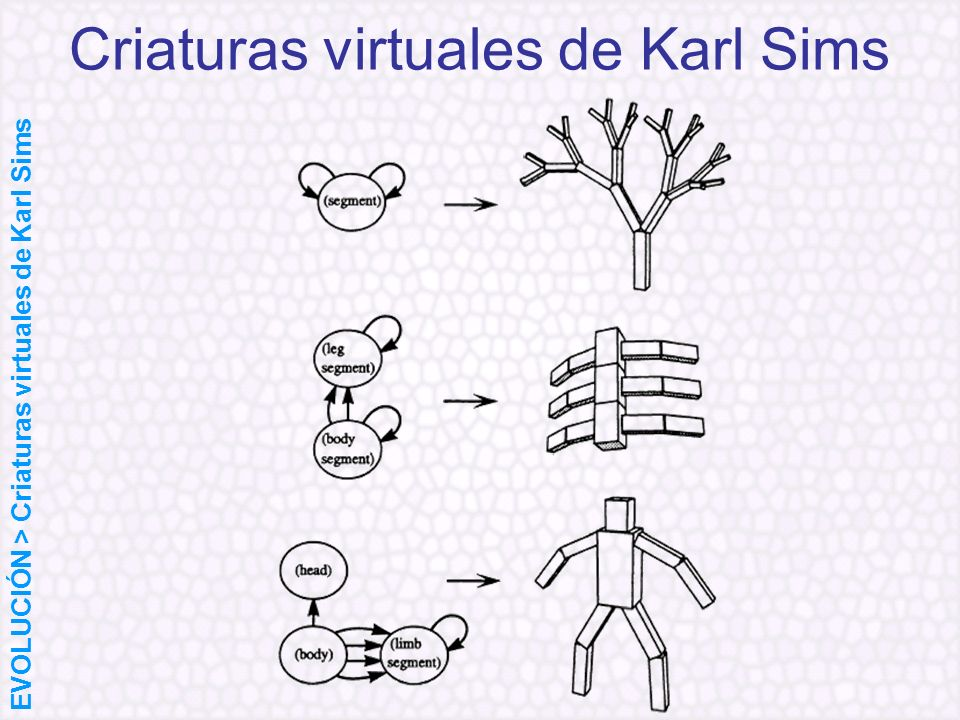 Criaturas virtuales de Karl Sims EVOLUCIÓN > Criaturas virtuales de Karl Sims