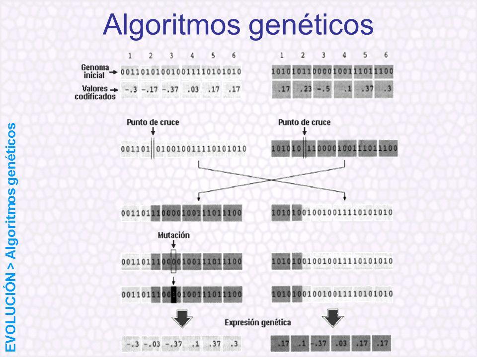 Algoritmos genéticos EVOLUCIÓN > Algoritmos genéticos
