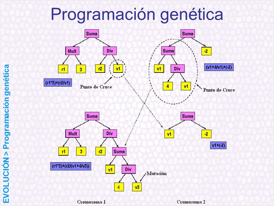 Programación genética EVOLUCIÓN > Programación genética