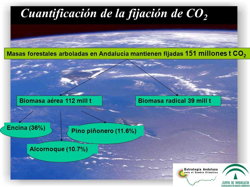 a) Cuantificación de la fijación de CO 2 Masas forestales arboladas en Andalucía mantienen fijadas 151 millones t CO 2 Biomasa radical 39 mill t Bioma