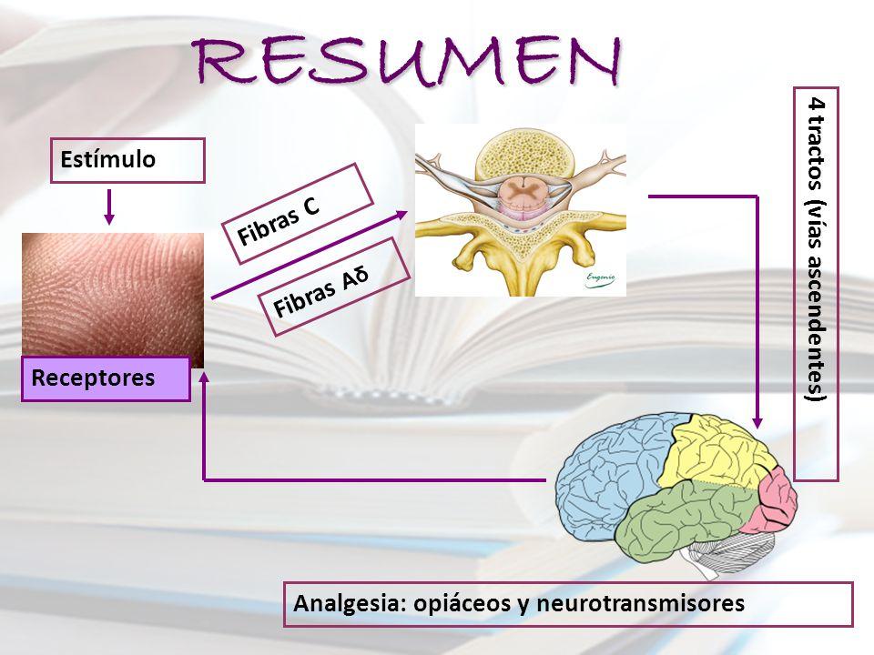 RESUMEN Estímulo Receptores Fibras C Fibras Aδ Analgesia: opiáceos y neurotransmisores 4 tractos (vías ascendentes)