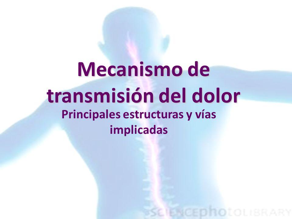 Mecanismo de transmisión del dolor Principales estructuras y vías implicadas