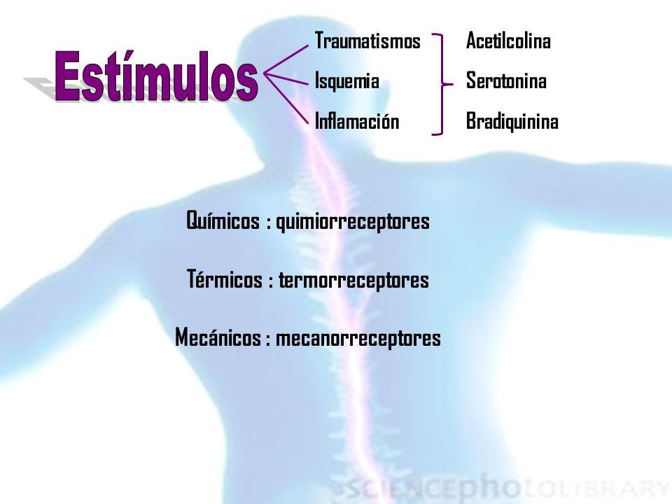 Químicos : quimiorreceptores Térmicos : termorreceptores Mecánicos : mecanorreceptores Acetilcolina Serotonina Bradiquinina Traumatismos Isquemia Infl