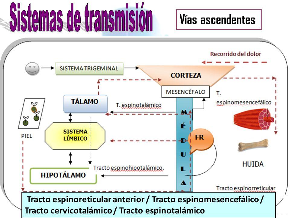 Analgesia Región gris periacueductal + áreas periventriculares del mesencéfalo + parte superior de la protuberancia Núcleo magno del rafe + núcleo reticular paragigantocelular Médula espinal Complejo inhibidor del dolor